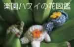 楽園ハワイの花図鑑